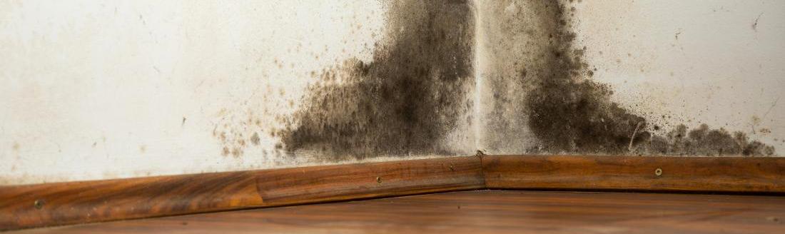 eliminare la muffa dai muri